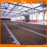 Bello Multi-Span Greenhouse con Venlo Structure