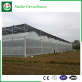 Landwirtschafts-Plastik-/Film-Gewächshaus mit Wasserkultursystem für Verkauf