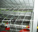 Automação New Poultry Chicken Farm Gaiolas Equipamento para Pullet Hot / Cold Dipped Galvanized (A Type Frame)