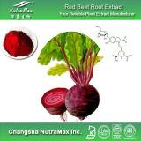 Extrait de racine de betterave rouge d'approvisionnement de GMP (bétanine 4%, 4:1 ~20 : 1)