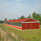 Farm BuildingsのためのPre-Engineered Steel Structure
