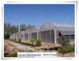 Casa verde da película da camada dobro agricultural para o tomate