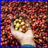 Машина шелушения кофейного зерна цены по прейскуранту завода-изготовителя с высоким качеством