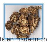 Uittreksel van Notopterygium Incisum/de Wortel Notopterygium het van uitstekende kwaliteit