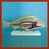 科学の製造者の魚の解剖学モデルのための専門の製造業者の動物モデル