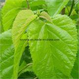 Выдержка листьев шелковицы Dnj (хлоргидрата 1-Deoxynojirimycin)