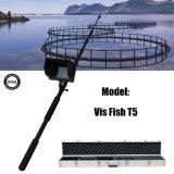 Câmera video da inspeção do módulo impermeável da câmera do endoscópio com 7 polegadas LCD DVR para a cultura aquática de cultivo subaquática (peixe T5 do Vis)