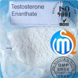 Weißes Steroid Puder-Testosteron Enanthate für muskulöse Ausdauer