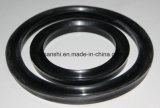 Y Oil Seal for Bearing