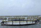 Cage d'exploitation de pisciculture de HDPE pour l'exploitation de pisciculture en mer profonde