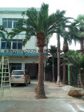Grand palmier artificiel en plastique décoratif extérieur de datte