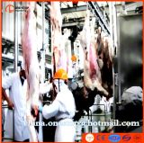 La linea di produzione di uccisione della mucca di Halal bestiame del macello lavora