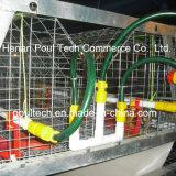 Gaiola da galinha da franga da tecnologia de Poul (um frame)