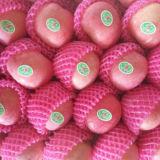 Vom Obstgarten zu Ihrer Hand, die von frischem FUJI Apple erröten Rot hochwertig ist