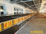 親肉焼き器のための自動養鶏場の繁殖動物装置