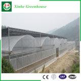 販売のためのHydroponicシステムが付いている農業のプラスチック温室