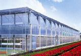 Serre e sistemi idroponici commerciali per lattuga