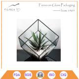 가정 정원 결혼식 훈장을%s 입방체 모양 플랜트 땜납 유리제 Terrarium 장비 창조적인 꽃 화병 유리제 화분