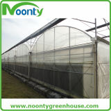 Agriculture économique Multi-Spans Film Green House (NOONTY)
