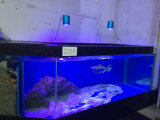 Luces patentadas del acuario del item 60W LED con el Ce RoHS
