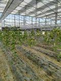 doppio comitato solare del coperchio di vetro 18V (BIPV) 150W-160W