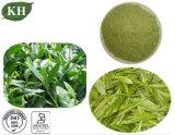 酸化防止剤のための自然な草のエキスの緑茶エキスPolyphenol/EGCG/Caffein