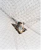 Anti réseau noué ou sans noeuds d'oiseau pour le raisin