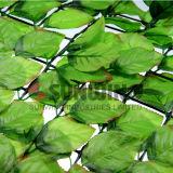 Da cerca plástica da folha da HERA do Boxwood do jardim das conversão conversão artificial