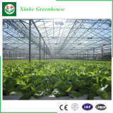 Estufa de vidro do túnel econômico para vegetais