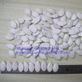Gérmenes de calabaza blancos como la nieve de calidad superior