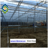 Prix ​​d'usine PC Sheet Greenhouse for Growing Cucumber