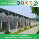 Chine Hot Sale Polycarbonate Sheet Vegetable Greenhouse Plastic