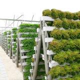 Invernadero hidropónico de la película agrícola del PVC