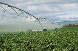 Machine de pulvérisateur d'irrigation