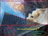 Impresión unidireccional de los gráficos y de la muestra de la película de la ventana