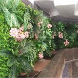 contesti artificiali della parete delle piante di modo