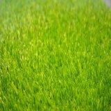 人工的な芝生Ssに床を張っている人工的な草
