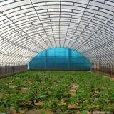 Дом горячего тоннеля стальной рамки сбывания высокого зеленая с новой конструкцией способа