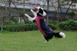 Il cane copre il prodotto dell'animale domestico