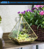 Glass Geometric Terrarium Box Tabletop Succulent Plant Terrarium Box