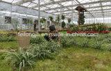 Eco 관광 온실 생태학적인 관광 온실