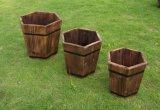ホールダーが付いている屋外の木の植木鉢の園芸植物