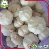 Sacchetto/scatola bianchi puri freschi della maglia dell'aglio 10kg