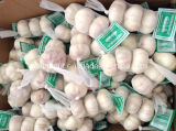 China Normal White Garlic 3p/10kg Carton (5.0-5.5-6.0cm)