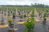 منظر طبيعيّ بناء, [ويد كنترول] طمي سياج لأنّ حديقة