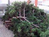 Tour d'arbre de Disgui pour Communicationsed