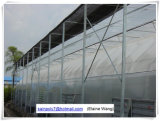 Дом пленки фабрики Китая зеленая Hydroponic для томата