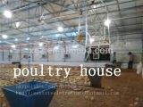 Il pollame prefabbricato dell'azienda agricola di pollo alloggia la tettoia