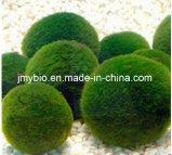 Poudre organique d'extrait de chlorella d'approvisionnement d'usine : Protéine 60%, carotenoïdes 2%, additif nutritif de la chlorophylle 3%, perte de poids