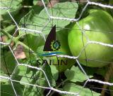 Fio de galinha sextavado de aço de Sailin para a cerca da proteção da fruta